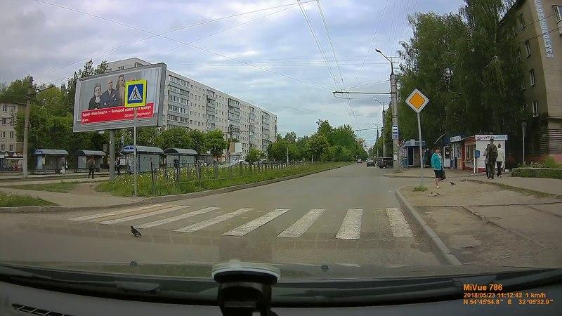 Смоленск, голубь пешеход.