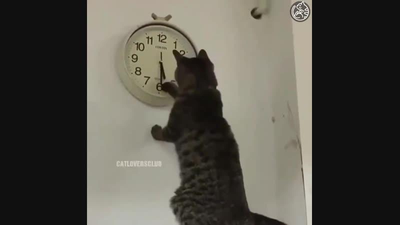 Так, во сколько там котика надо кормить!