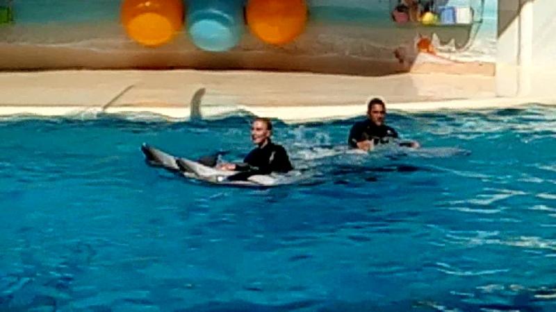 Дельфинарий в Коктебеле 3 Август 2018