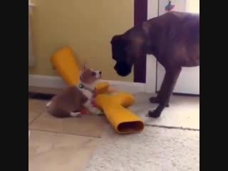 Бедный пёсик хотел просто поиграть -) А этот «злодей» испугал его, аж пришлось убегать