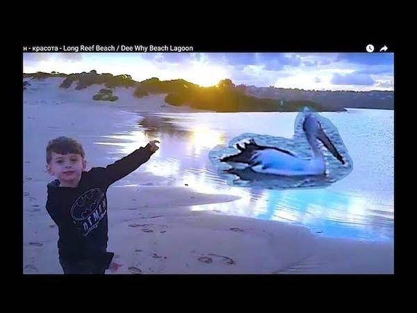 Цапля и Пеликан - красота - Long Reef Beach / Dee Why Beach Lagoon