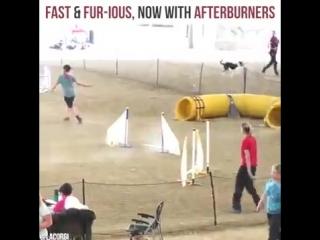Собачий форсаж