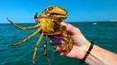 Феодосия Поймал огромного КРАБА Купаемся на городском пляже Случайная встреча с подписчиком