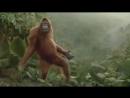 Я просто ржал - обезьяна танцует лучше всех