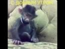 V-s.mobiСмешная обезьяна с добрым утром.mp4
