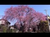 Японская Музыка Для Сна, Отдыха И Восстановления Сил, Для Релаксации И Медитации