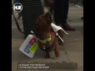 Собаки против Brexit: в Лондоне прошли митингри против выхода из состава Европы