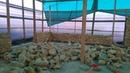 Строительство дома из натурального камня в СПб