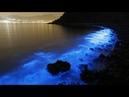 The Bioluminescence Phenomenon How it works