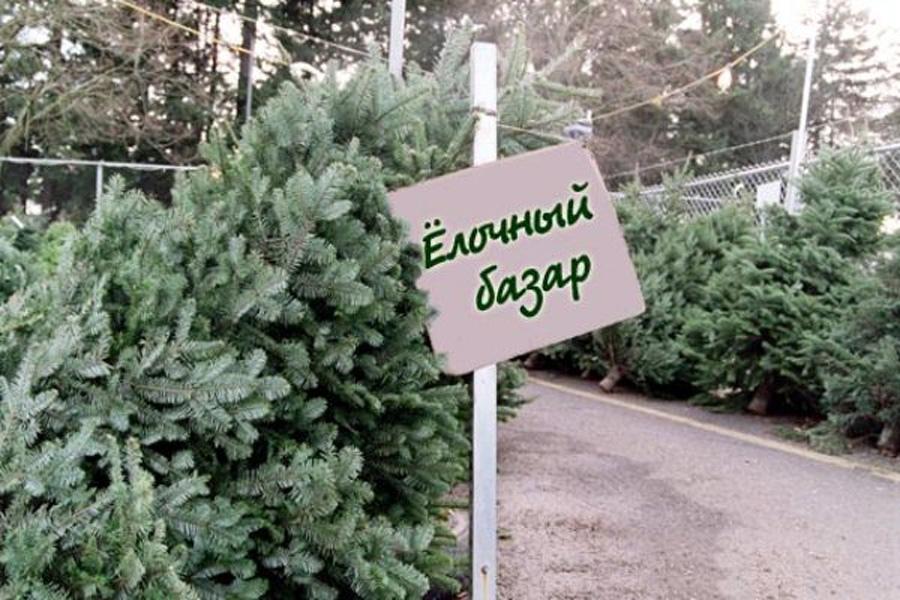В Луганске организуют открытие 150 мест продажи новогодних елей
