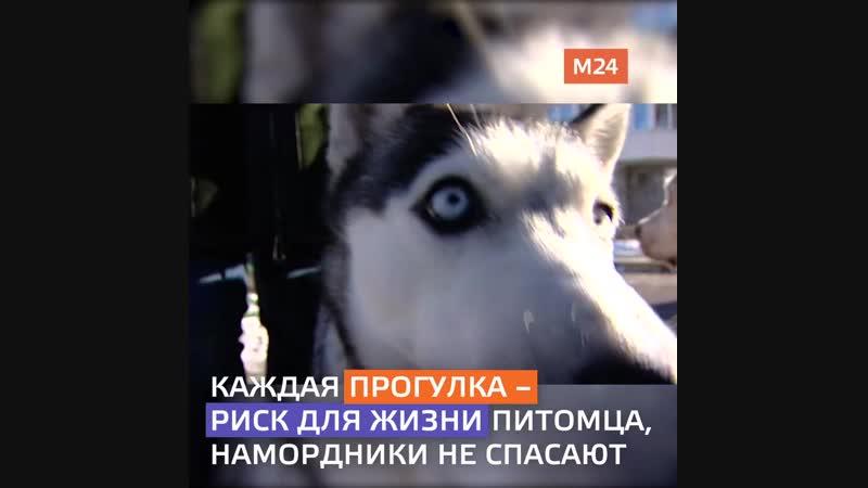 В Южном Бутово убивают собак, 18