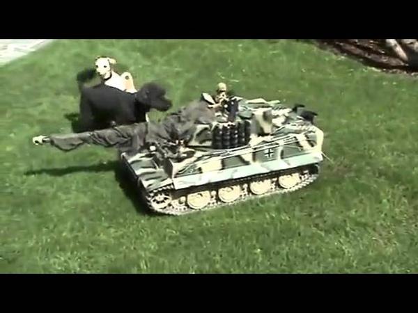 для танка собака не преграда