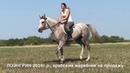 Продажа лошадей арабской породы конефермы Эквилайн, тел., WhatsApp 79883400208