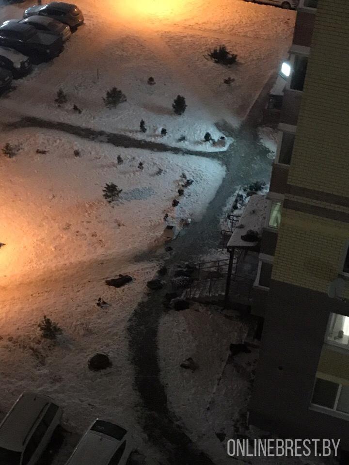 Следствие женского гнева? В Бресте из окна 5-ого этажа выбросили мужские вещи