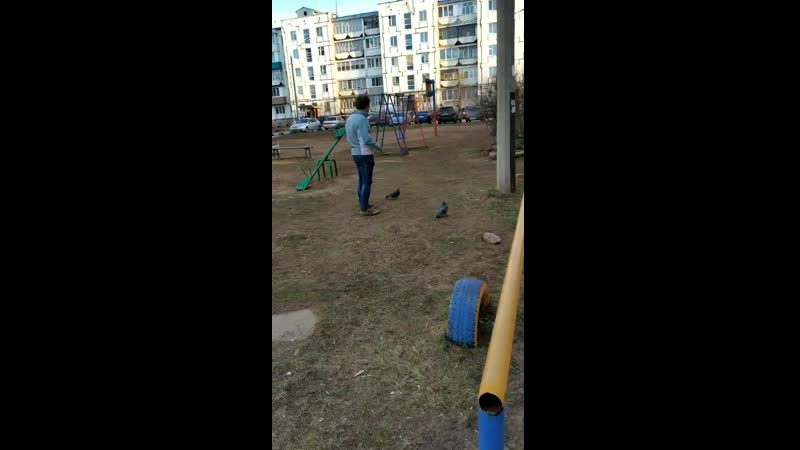 Гопник ловит голубей на семечки