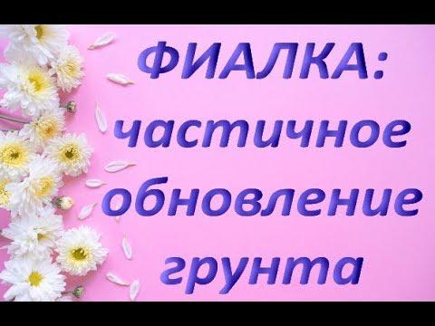ПЕРЕСАДКА ФИАЛКИ (СЕНПОЛИИ)