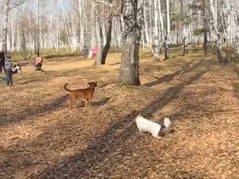 Собака забирается на дерево