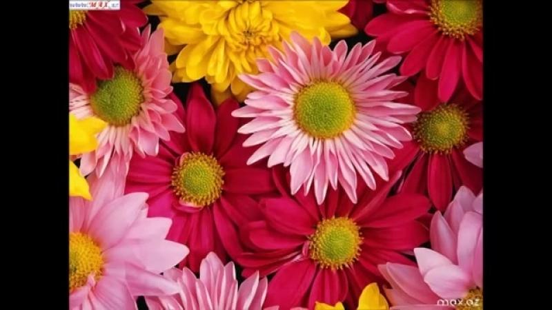 Милые женщины это море цветов для вас