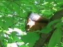 Белка в Теплостанском парке Уже поспели орехи