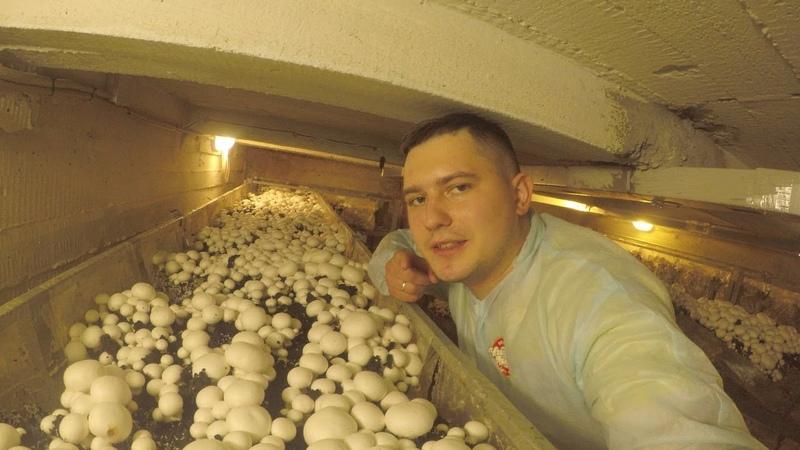 Бизнес в гаарже или в сарае может под домом в подвале да где угодно Выращивание шампиньонов очень интересное занятие а еще и прибыльное