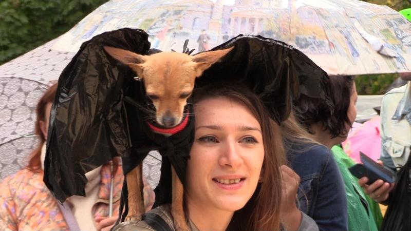 Человеку друг а эльфу лошадь первый московский костюмированный парад собак ФАН ТВ