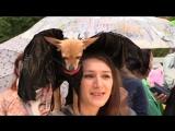 Человеку — друг, а эльфу — лошадь: первый московский костюмированный парад собак. ФАН-ТВ