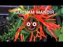 Harinam Mandir Prague - Live with taste!
