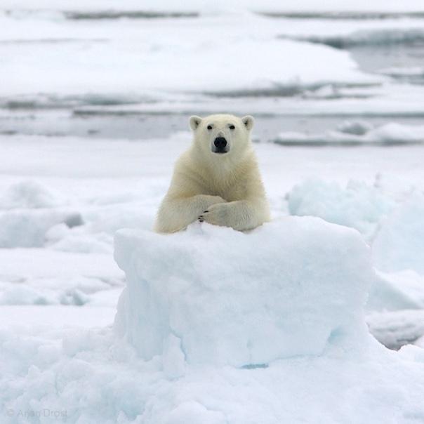 Про сибирские реки Зимы у нас в Сибири морозные, крепкие. Реки в иной год промерзают по самое дно, где метр глубина — там на метр, где двадцать — там на двадцать. В такие годы мужики на рыбалку