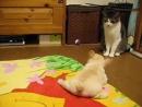 Собачья экспансия хорошее настроение, юмор, смешное видео, собаки, собака, щенята, щенки, щенок, дети, кошка, кот, битва, пёс.