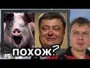 Семченко. Пьяная свинья Порошенко аж захрюкал от удовольствия
