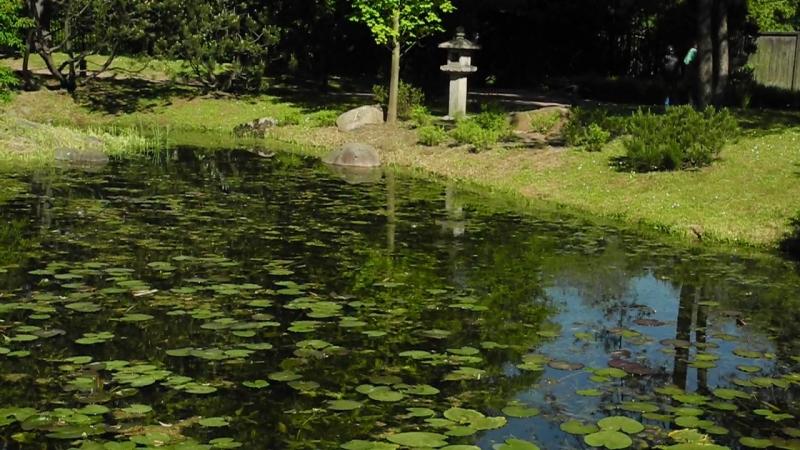 Песнь лягушек в японском саду (Москва, Ботанический сад, май 2018)