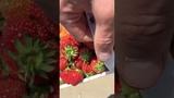 Strawberry picking - Сбор kлубники - La cueillette de fraises