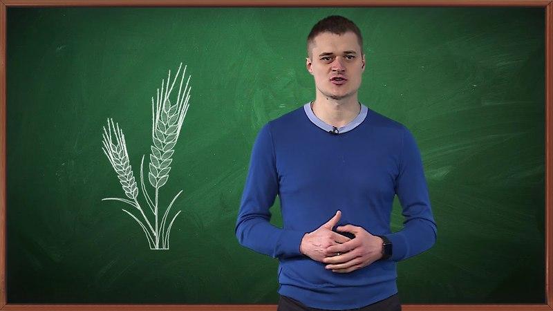 Директор Брянской зерновой компании Роман Мимонов стал участником Всероссийского открытого урока
