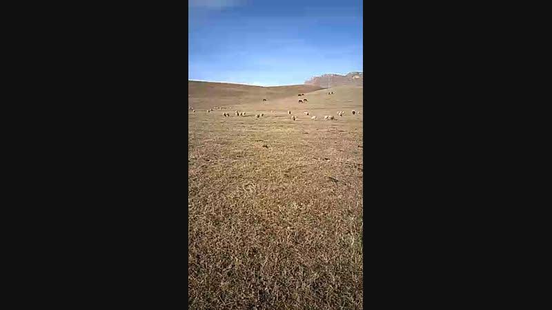 Овцы решили позагорать на солнышке