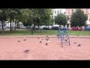 Совещание по возвращению детской площадки в сквере на Гагаринской улице. Санкт-Петербург 17.09.2018