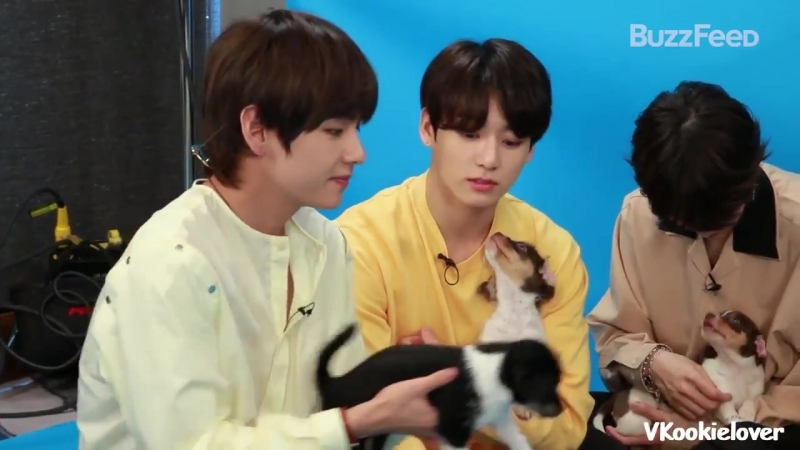 BTS Plays With Puppies While Answering Fan Questions | Taekook/Vkook moments