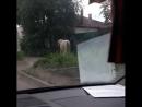 Обездоленные коняки в Иваново