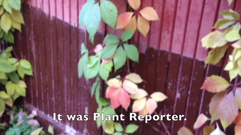 РАСТИТЕЛЬНЫЙ ВЕСТНИК СЕЗОН 4 ВЫПУСК 4 || PLANT REPORTER SEASON 4 EPISODE 4 ENGLISH SUBTITLES