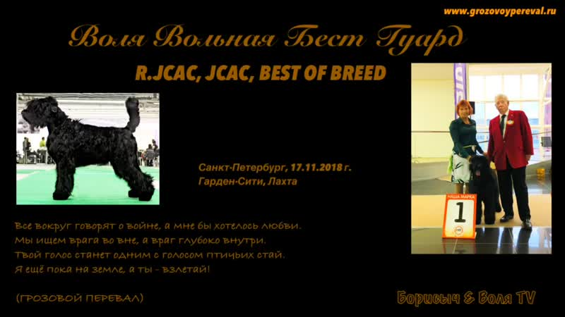 Best of breed в 10 мес.! РЧТ Воля Вольная Бест Гуард, Россия, Санкт-Петербург