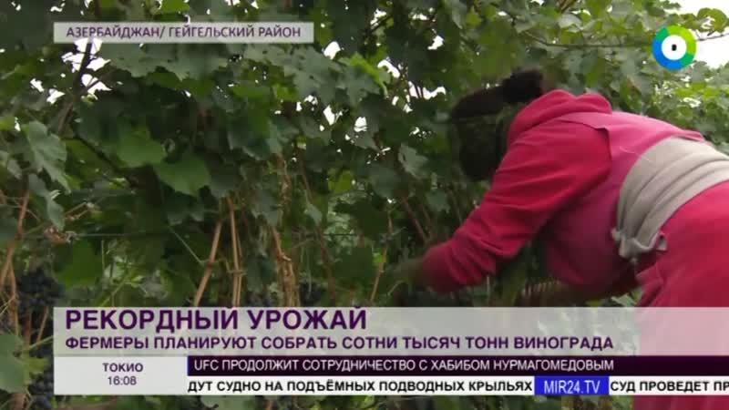 ТВ В Азербайджане собран рекордный урожай винограда.Азербайджан Azerbaijan Azerbaycan БАКУ BAKU BAKI Карабах 2018 HD ТУРЦИЯ 18