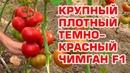 ЧИМГАН F1 - СУПЕР КРАСНЫЙ ПОМИДОР ДЛЯ ЭКСПОРТА