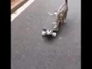 кошка не боится людей