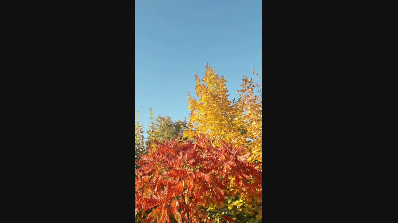 Осень превращает привычные маршруты в волшебные тропинки и добавляет в знакомые пейзажи капельку ЧУДА!.