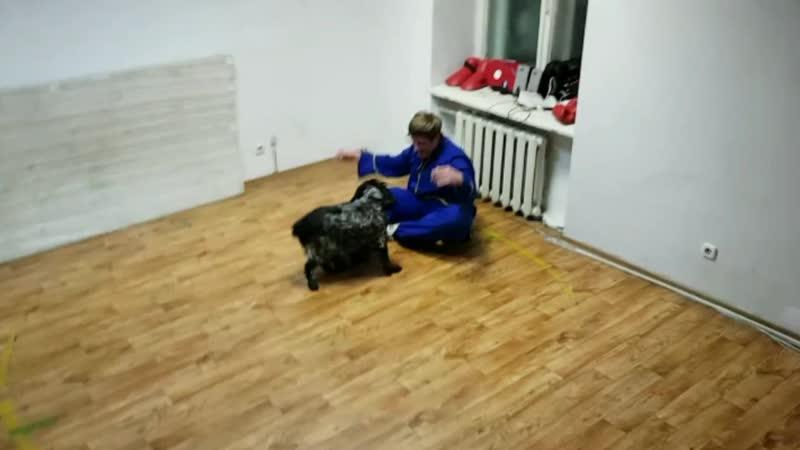 бой с собакой