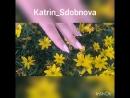 Katrin Sdobnova