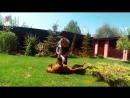 Родезийский риджбек - Интересные факты о породе - Собака породы родезийский риджбек
