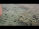 Кормление рыбок в Красном море. Май 2018г.