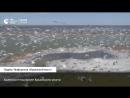 Махнув крылом: колонии птиц возле Крымского моста