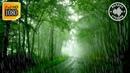 Мягкий Шум Дождя в Лесу Белый Шум Природы Нежный Дождь Для Сна и Расслабления