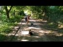 Алабай 4,5мес Альва дрессировка с 🐈 котами